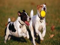 El hombre, el perro y la pelota