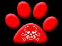 Como actuar en caso de intoxicación o envenenamiento de nuestro perro// Imatge Refugio La Amistad