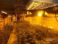Detingut un home per cultivar  marihuana en un garatge de Terrassa
