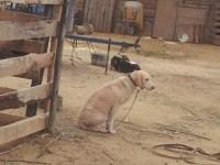 Gossos a la boira