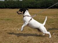 La frustración de nuestros perros // Imatge Indicans