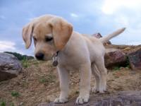 Mi perro no viene, mi perro se va // Imatge Indicans
