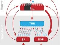 Les xarxes neuronals afectades poden ser la  font potencial de símptomes inexplicables