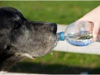 Com saber si la meva mascota està deshidratada