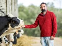 L'IRTA i DANONE col·laboren pel benestar animal del boví lleter
